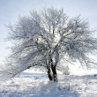 Tree in snow, winter sesone — Stok fotoğraf