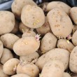 Potato collected in box — Stock Photo