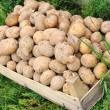 Stock Photo: Potato, harvest, season for