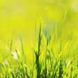 Green grass in the morning, early light on — Stock Photo