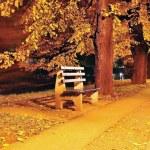 Fall scène, park, bomen, alley — Stockfoto