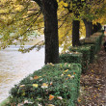 Fall scene, park, trees, alley — Stock Photo