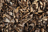Brown and black fall leaves — Stock Photo