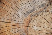 Very interesting wood pattern, shape, background — Stock Photo