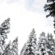 Beautiful winter forest — Stockfoto