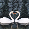 Beautiful swans on the lake — Stock Photo #9992925