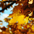 Fall leaves — Stock Photo #9993085