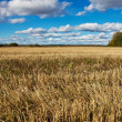 Field in autumn — Stock Photo