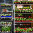 Stock Photo: Garden center