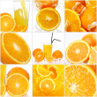 Collage of different orange fruits — Stock Photo