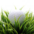 Golf ball in grass — Stock Photo #9641585
