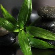 Massage stones and bamboo leaves — Stock Photo
