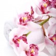 Orchid over white background — Stock Photo