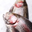 Fresh trout — Foto de stock #9795522