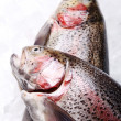 Fresh trout — Stockfoto #9795522