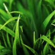 Close up of green grass — Stock Photo #9796145