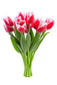 Beautiful red tulips — Stock Photo