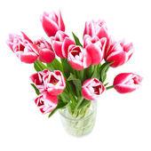 Hermosos tulipanes rojos son una vista superior — Foto de Stock
