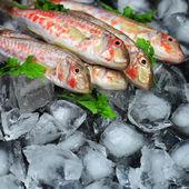 Peixe fresco — Foto Stock