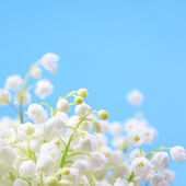 Flower lily of the valley — Stok fotoğraf