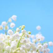 Flor lírio do vale — Foto Stock