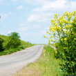 Canola by road - Stock Photo