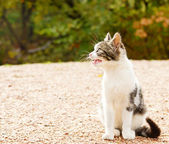 Homeless kitten — Stock Photo