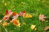 Gevallen bladeren — Stockfoto