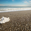 Royalty-Free Stock Photo: Shell on beach