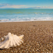 Shell on beach — Stock Photo #8619349