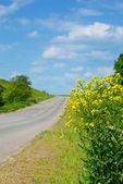Canola por estrada — Foto Stock