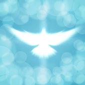 Shining dove — Stock Photo