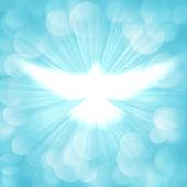 Pomba com raios a brilhar — Fotografia Stock