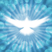 Shining dove with rays on a dark — Stock Photo