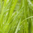 Fresh wet grass — Stock Photo