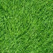 Fresh spring green grass — Foto de Stock