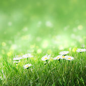Daisies in the grass, — Stock Photo