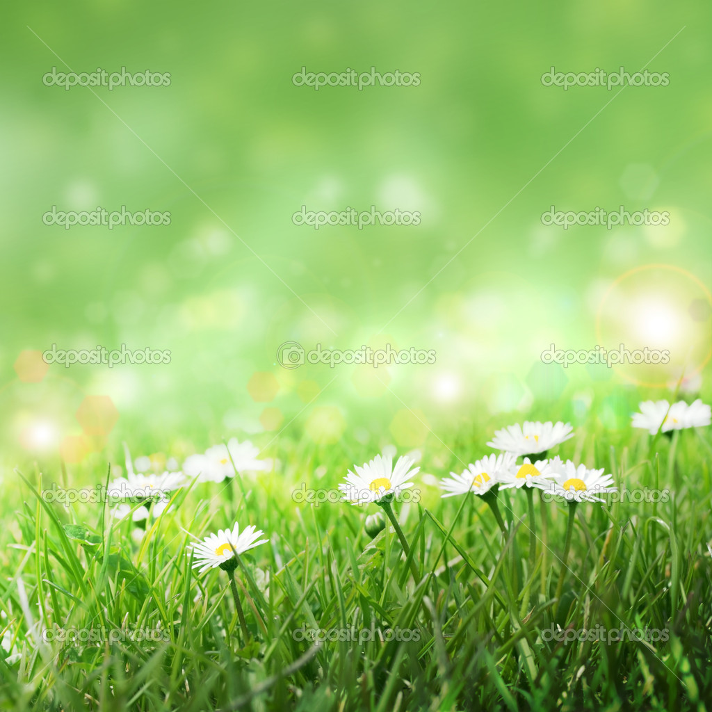 Daisies in the grass, spring background — Stock Photo #9849489