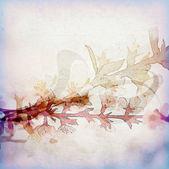 Flores violetas — Foto de Stock