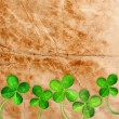 Four Leaf Clover — Stock Photo #9900404
