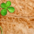 Four Leaf Clover — Stock Photo #9900461