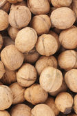 Whole walnuts — Stock Photo