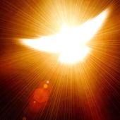 Pomba brilhante — Fotografia Stock