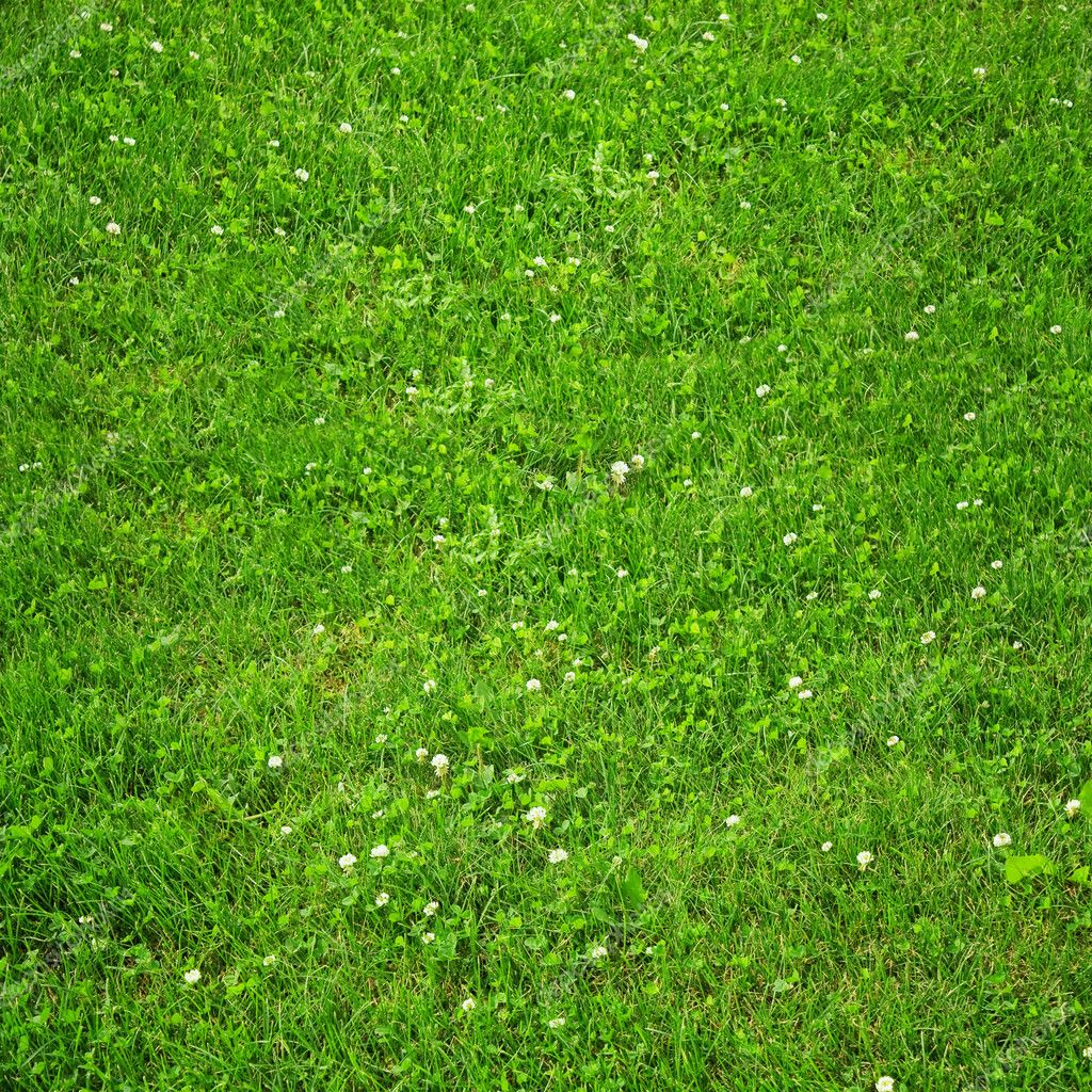 Texture lawn with green clover blossom — Photo #9902100