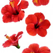 Flowers isolated on white. Colorful illustration. — Stock Photo #8237547