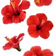 Flowers isolated on white. Colorful illustration. — Stock Photo