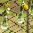 Spring flowers in glass bulbs on fence — Stock Photo #10490402