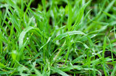 Green grass surface — Stock Photo