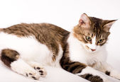 Beautiful young cat on white background — Stock Photo