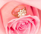 Beautiful pink rose with gold ring — Stock Photo